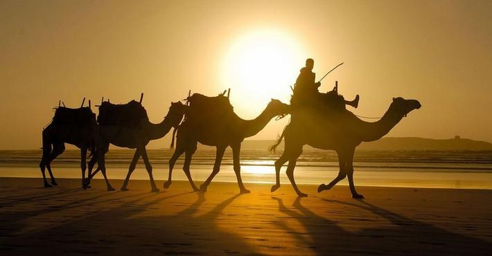 Отдых в Тунисе: информация для туристов