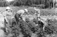 Общество: Почему в Советском Союзе под дачу выделяли строго 6 соток земли