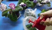 Лайфхак: 8 лайфхаков, как вернуть к жизни комнатные растения и без хлопот за ними ухаживать