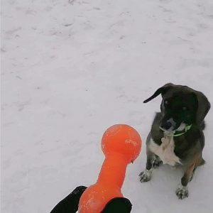 Пёс, который научился играть)