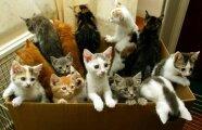 Общество: 5 причин, почему беспородистый кот намного лучше породистого
