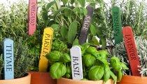 Лайфхак: Травы, которые можно выращивать на кухне, и советы по их высадке