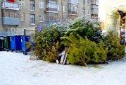 Лайфхак: 8 идей, как использовать елку после праздников, чтобы не выбрасывать