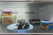 Лайфхак: Как избавиться от запаха в холодильнике при помощи газеты, если помыть его нет времени