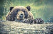 Лайфхак: Медведи обожают мед и охотятся за ним: правда или очередной миф