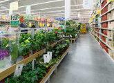 Идеи вашего дома: Какие растения стоит держать у себя на подоконнике, чтобы они и глаз радовали, и пользу приносили