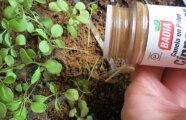 Лайфхак: 7 лайфхаков для цветоводов, которые помогут вырастить красивые и плодородные растения дома