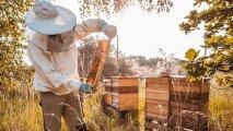 Общество: Зачем пчелам нужны в улье дармоеды и бездельники трутни